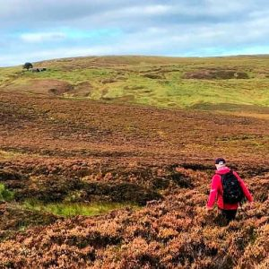 Wuthering Heights walk through heather